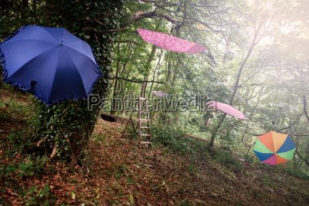 umbrellas hanging in trees