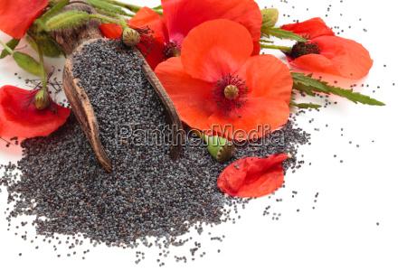 tempero temperos liberado flor planta grao