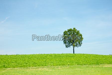 arvore campo vazio campos prados prado