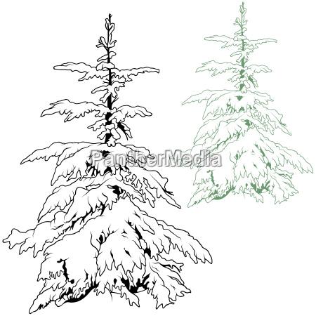 snowy conifer