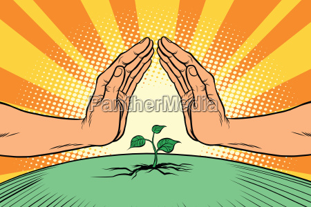 maos humanas que protegem um sprout