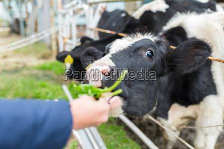 animal mamifero agricultura campo negro verao