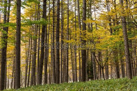 folha ambiente arvore parque madeira luz