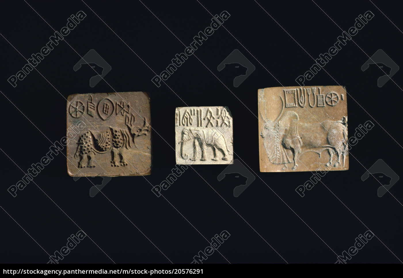 focas, representando, animais, da, civilização, indus - 20576291