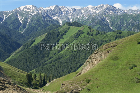 forested hills and snow capped mountains