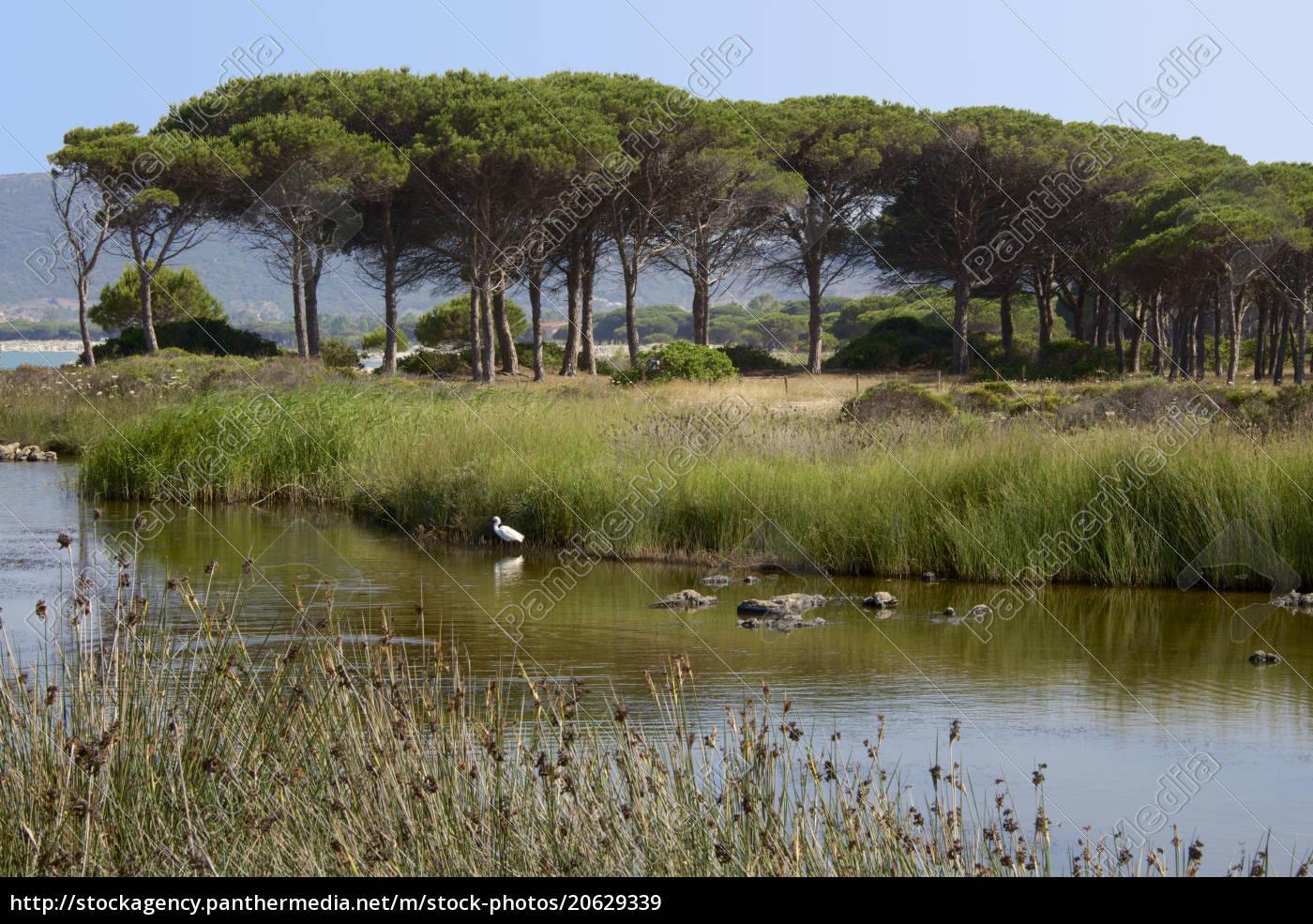 lago, com, plantas, de, água, e - 20629339