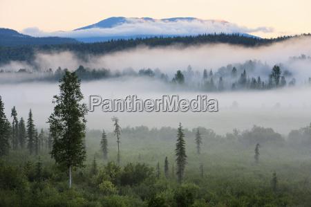 nevoa do amanhecer no parque provincial
