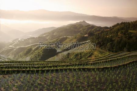 june suise longsheng terraced ricefields guangxi