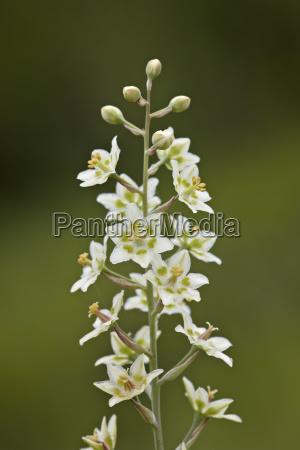 cor flor planta parque nacional lindas