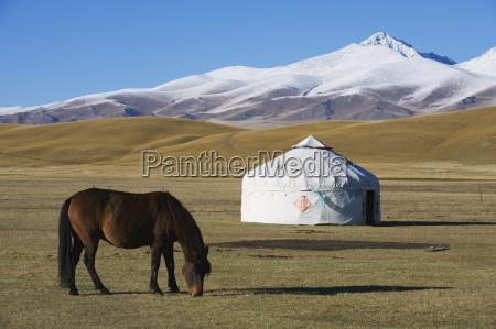 nomads horse and yurt bayanbulak xinjiang