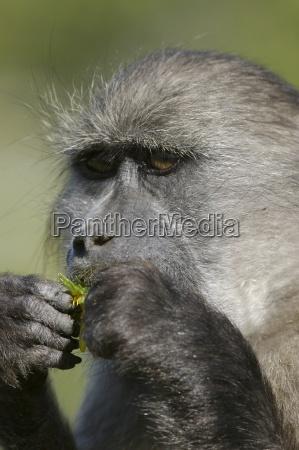 passeio viajar close up cor animal