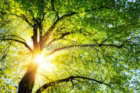 o sol brilha quente atraves das