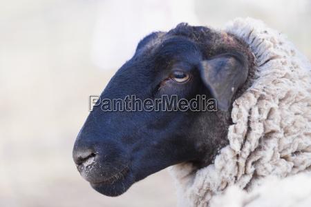 animal mamifero retrato negro retrato animais