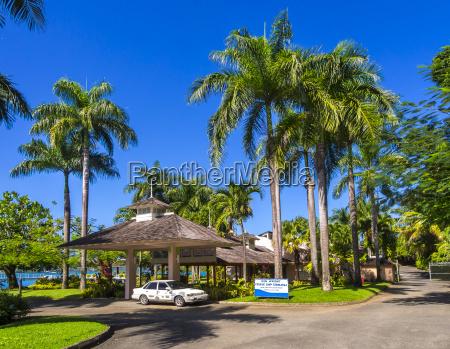 caraibas jamaica porto antonio palmeiras na