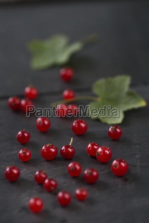 folha madeira frescura fruta fotografia foto