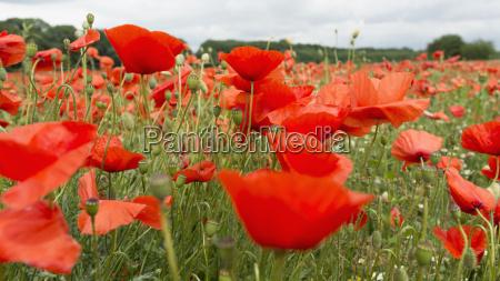flor planta agricultura nuvem campo frescura