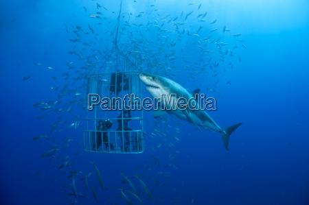 azul movimento em movimento animal peixe
