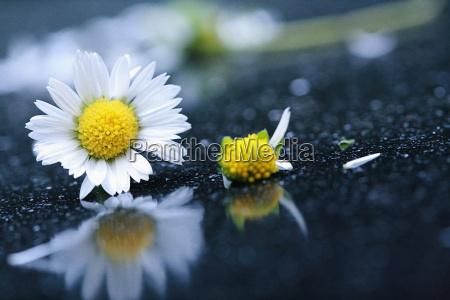flor planta lindas flores inflorescencia florescer
