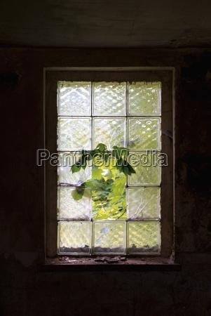 vidro copo de vidro arvore janela