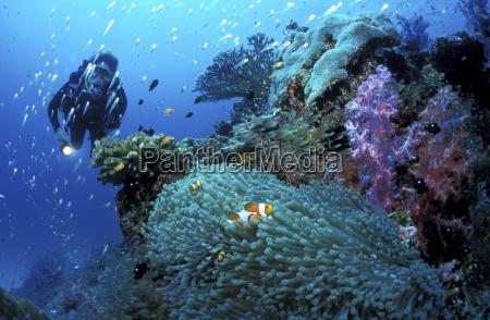 azul perigo risco animal peixe horizontalmente