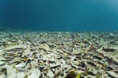 morte animal asia indonesia peixe subaquatico