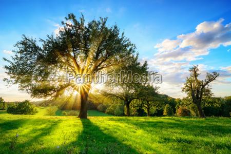 sun que brilha atraves de uma