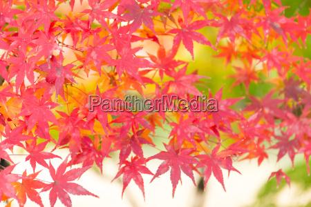azul belo agradavel folha cultura cor