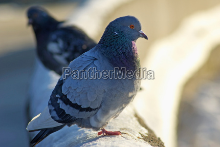belo agradavel solitario cor closeup inverno