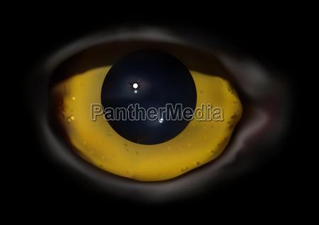owl eye macro