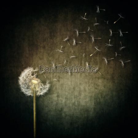 semente de escape