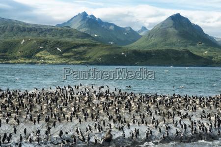 animais passaros america argentina antartica