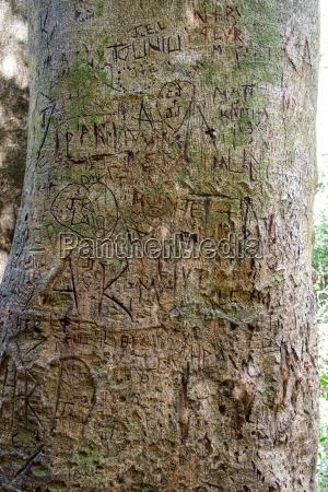 iniciais e nomes esculpidos na arvore