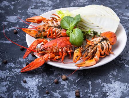 alimento gourmet garra marisco frutos do