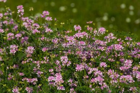 plantas de florescencia