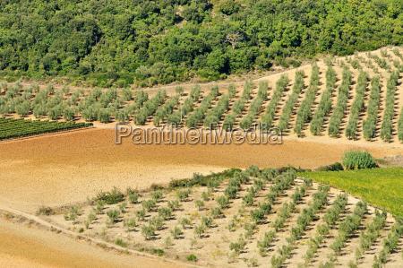 arvore madeira marrom agricultura campo europa