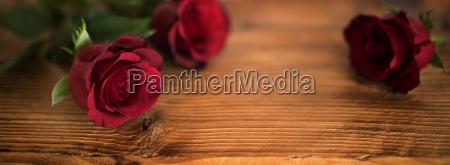 rosas vermelhas bonitas para o dia