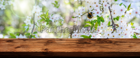 blossoms in spring with wooden table