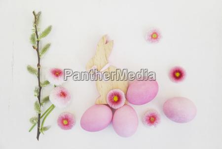 natureza morta cor flor planta madeira