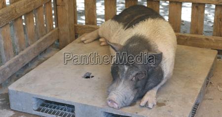 alimento dentro industrial animal mamifero agricultura