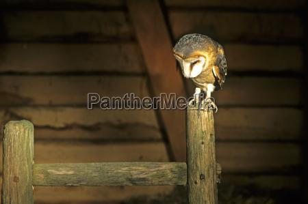 interior interior de fotos animal pajaro