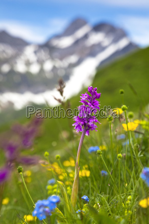 detalhe closeup montanhas flor planta lindas