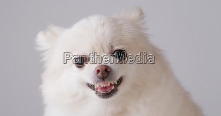 risadinha sorrisos belo agradavel liberado animal