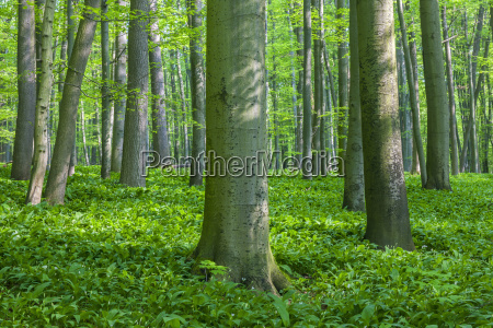 dappled light on tree trunks in