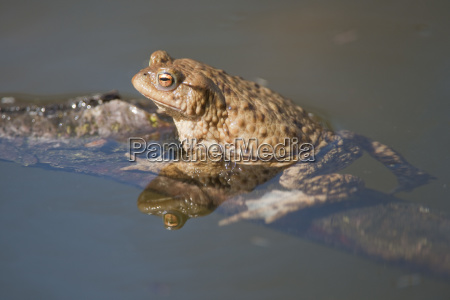 animal anfibio animais vistas europa vista