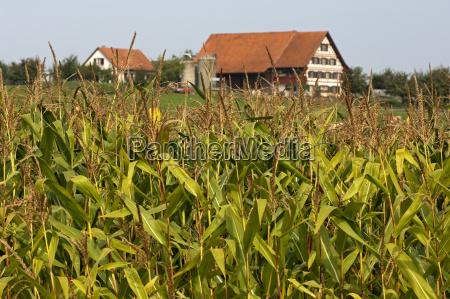 agricola agricultura planta implantado planta util