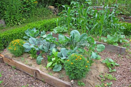 gardhave med forskellige typiske planter som