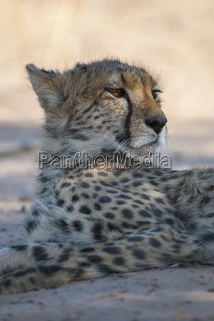 closeup mamifero parque nacional africa retrato