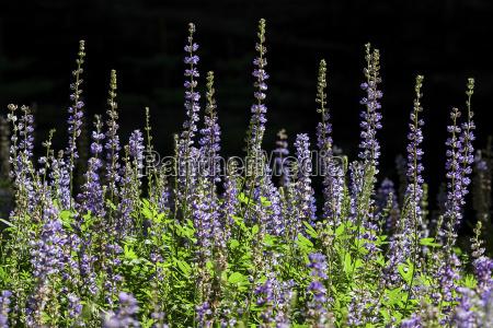 parque nacional flor lindas flores inflorescencia