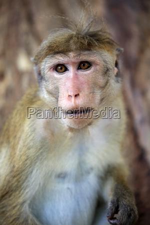 closeup animal mamifero parque nacional asia