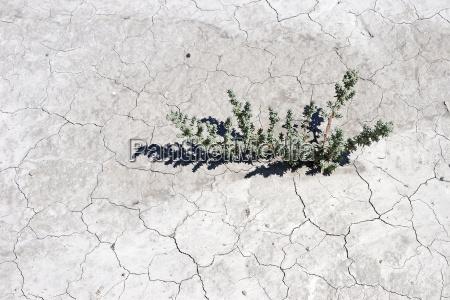 environment enviroment ground soil earth humus